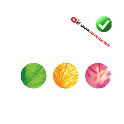 http://www.quizanswers.com/wp-content/uploads/2013/03/green-orange-pink-globes-line-logo-quiz.png