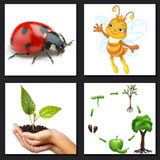 4 pics 1 movie answer, plant, nature, ladybug
