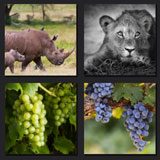 4 pics 1 movie, grapes, jungle animals